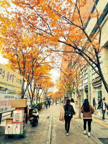 建国大学付近の街路樹もご覧の通り。