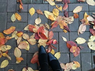 色とりどりの落ち葉の絨毯。