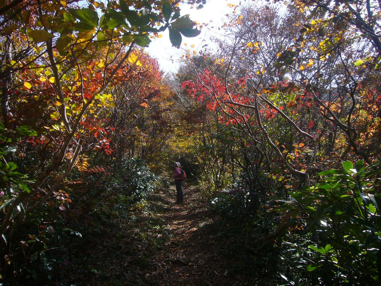 紅葉の登山道 H27.10.21