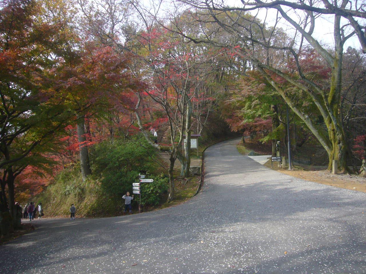 西山公園晩秋1 H27.11.22