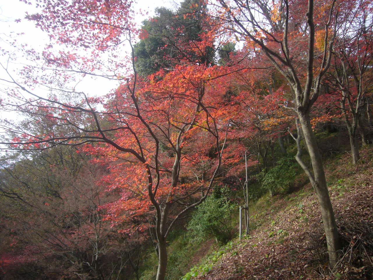 西山公園晩秋2 H27.11.22
