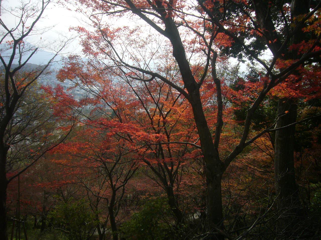 西山公園晩秋3 H27.11.22