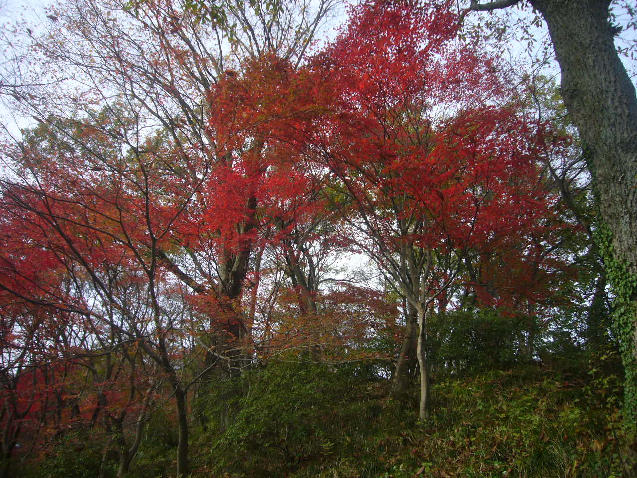西山公園晩秋5 H27.11.22