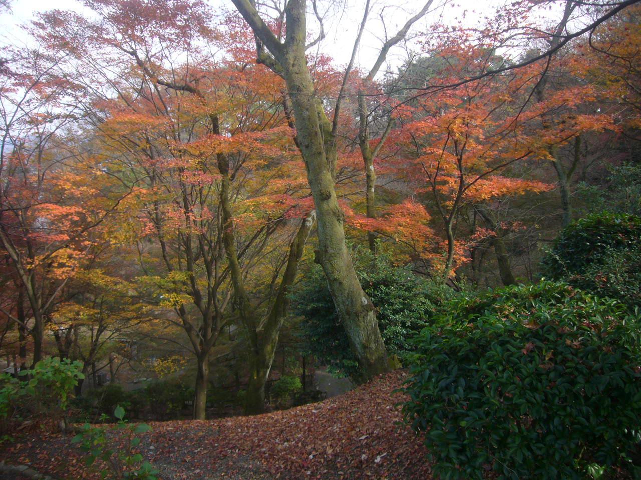 西山公園晩秋4 H27.11.22