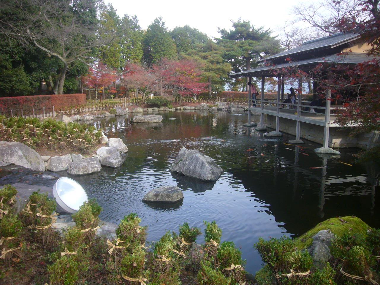 西山公園晩秋6 H27.11.22