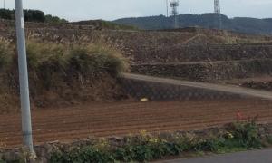 長島の畑の様子