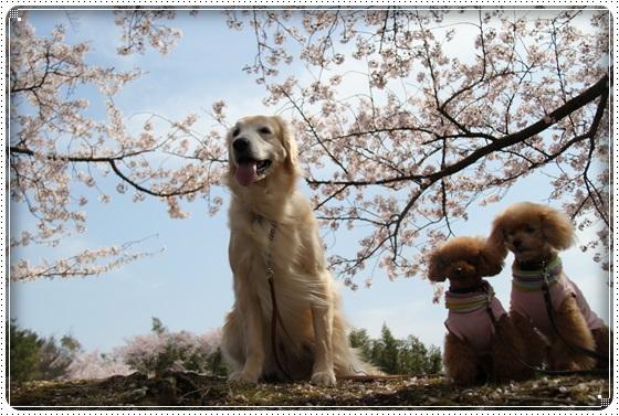 2016,4,6桜5