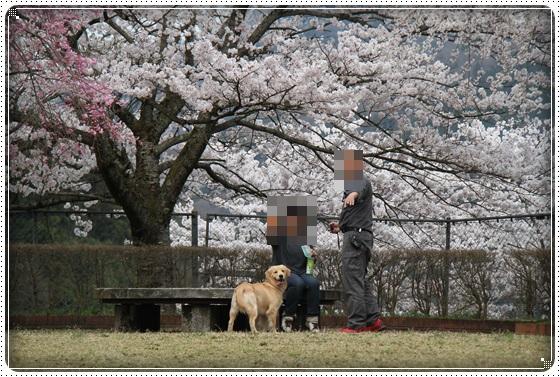 2016,4,7桜19