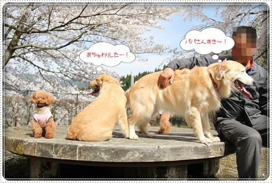 2016,4,7桜16