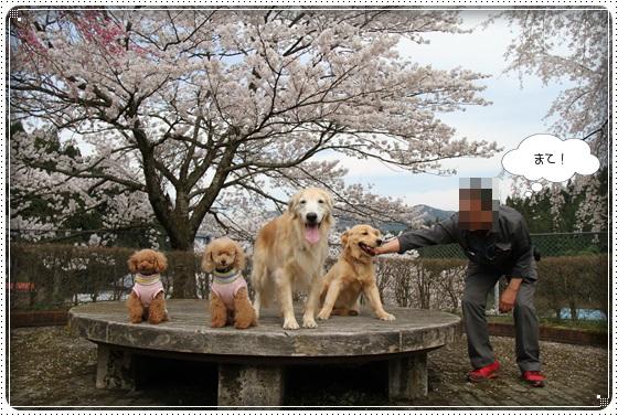 2016,4,7桜18