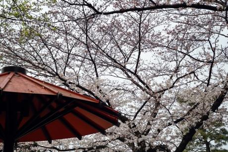 gion_sirakawa_1.jpg