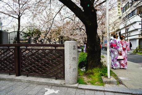 kiya_sakura_2.jpg