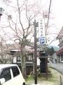 H28.3.30吉野中千本の桜(開花)@IMG_3038