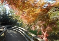 木道の紅葉