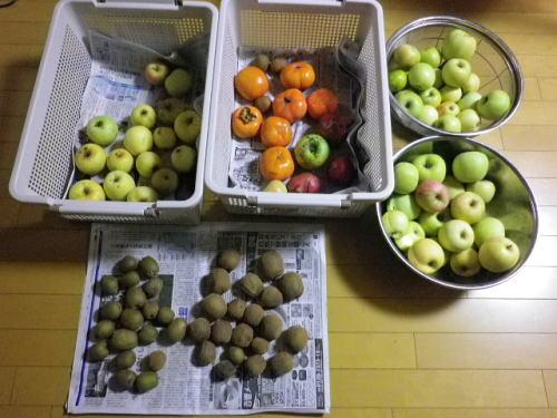 果物 2015 11 2