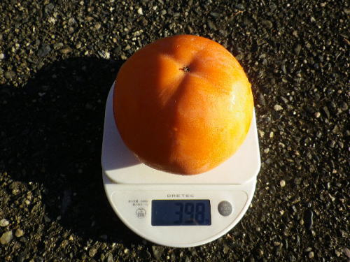 早田早生 2015 11 3-1