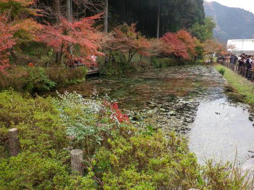 モネの池 2015 11 22-2