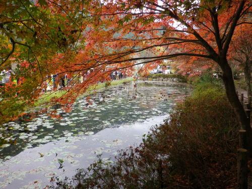 モネの池 2015 11 22-7