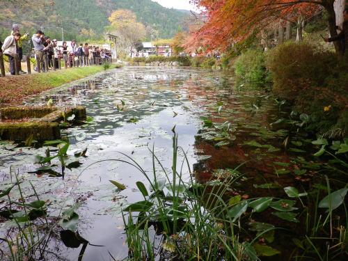 モネの池 2015 11 22-8