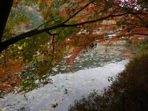 モネの池 2015 11 22-10