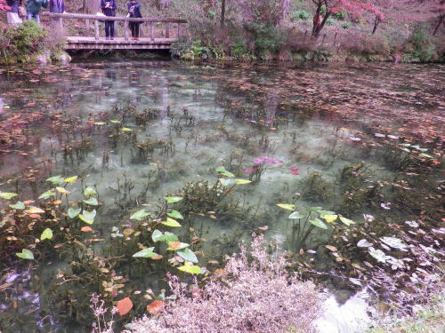 モネの池 2015 11 22-11