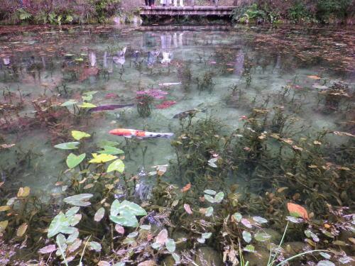 モネの池 2015 11 22-12