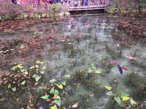 モネの池 2015 11 22-16