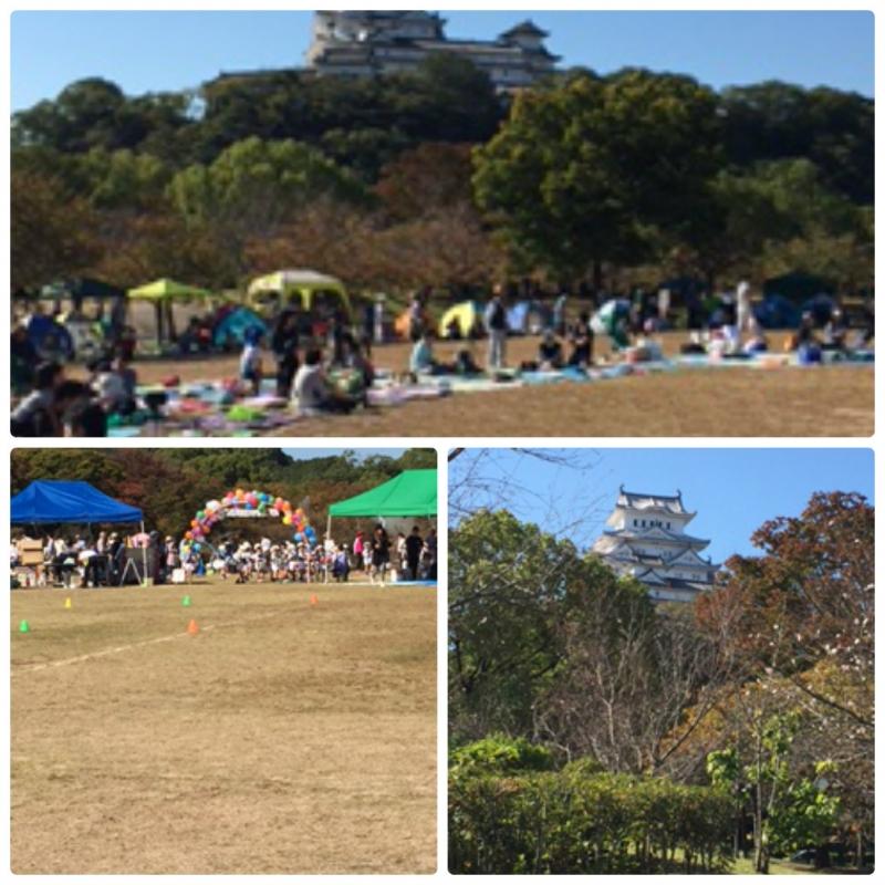 collage_photocat_20151020091201136.jpg