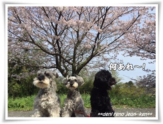 20160403_1h.jpg