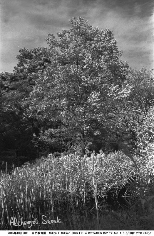 TestR72樹25℃×60分