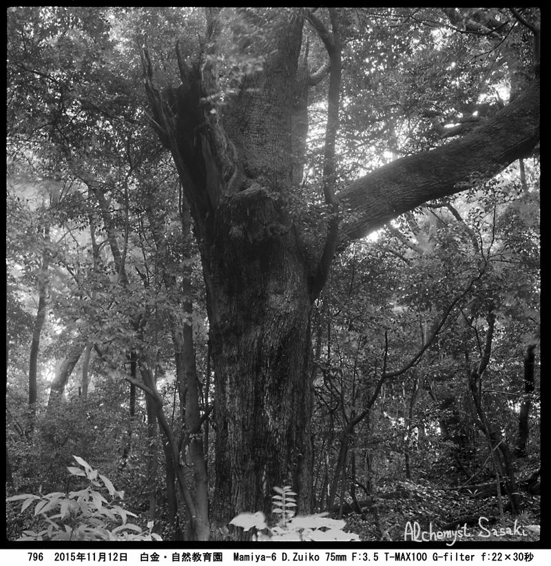 自然教育園の老木796-10