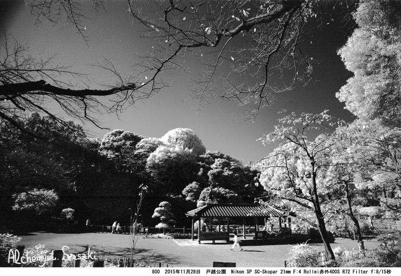 戸越公園の銀杏800-29
