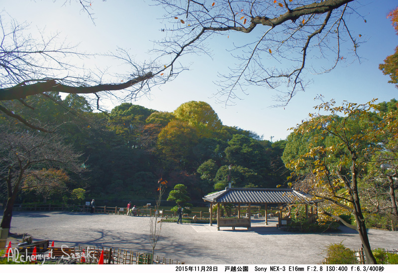 戸越公園の銀杏DSC05479