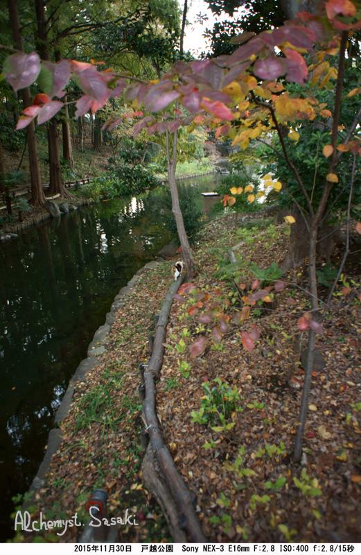 秋の暮れDSC05501