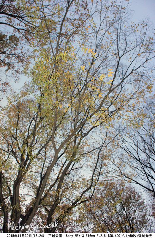秋の暮れDSC05511