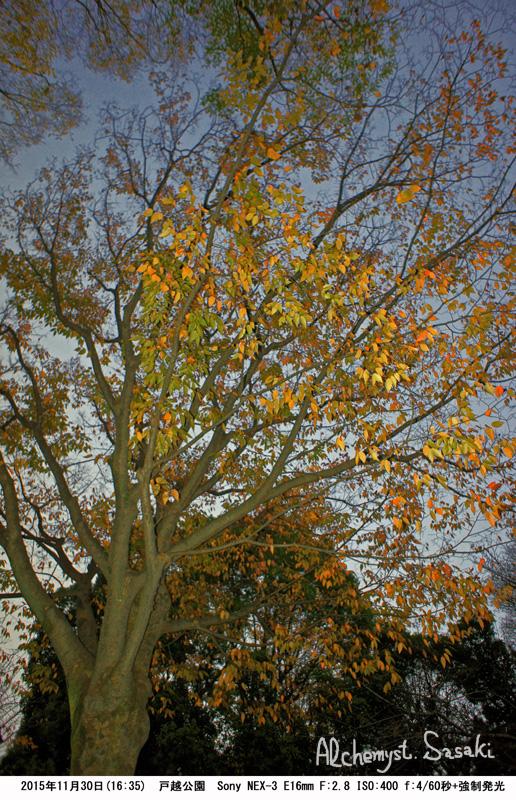 秋の暮れDSC05517