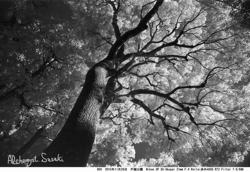 樹800-31