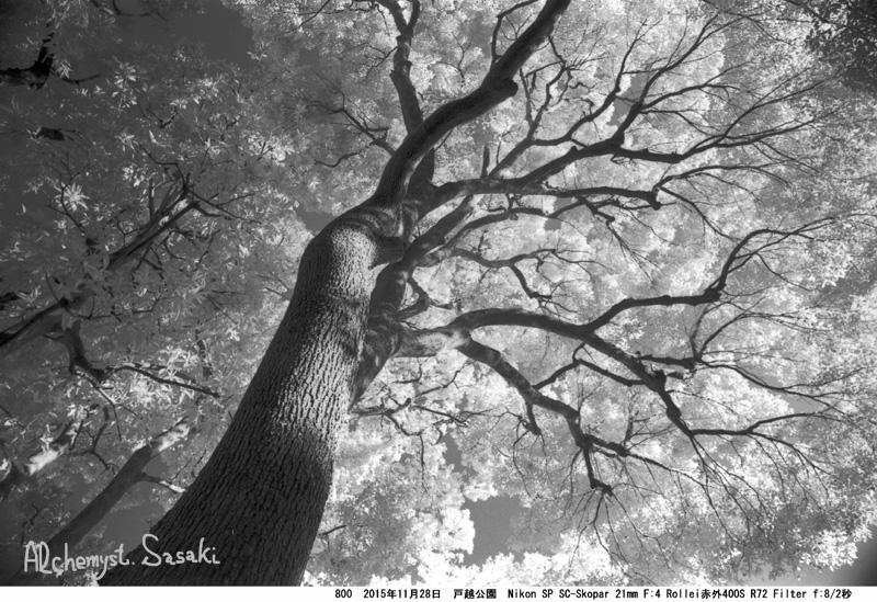 樹800-32