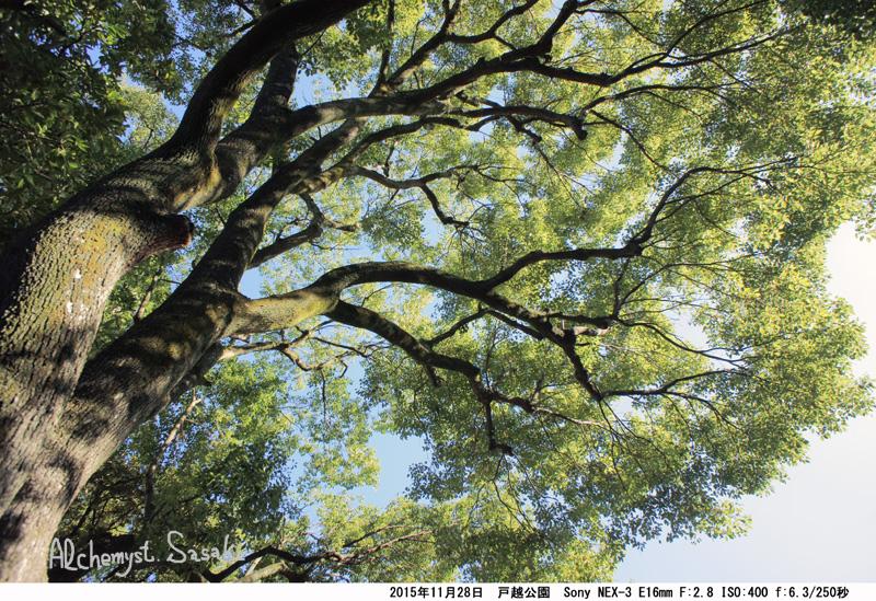 樹DSC05480