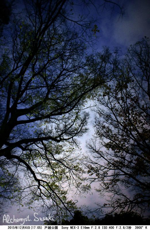 夕刻の戸越公園DSC06389