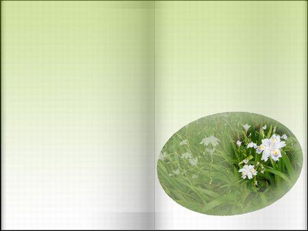 350x263しゃがの花ぼかしjpg