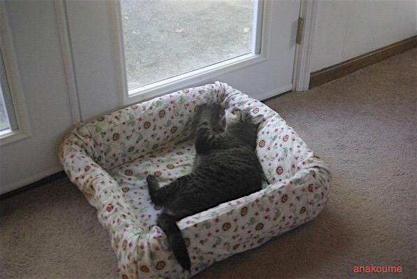 ベッドの活用法1