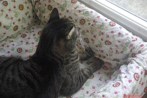 ベッドの活用法3