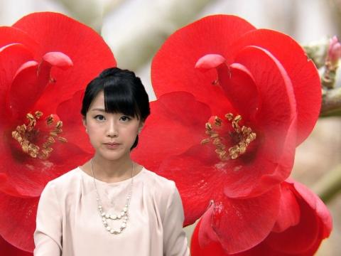 竹内由恵 ボケの花
