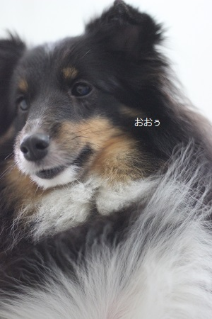 6012c