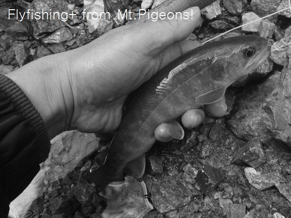 16-03-27_fish_007_R.jpg