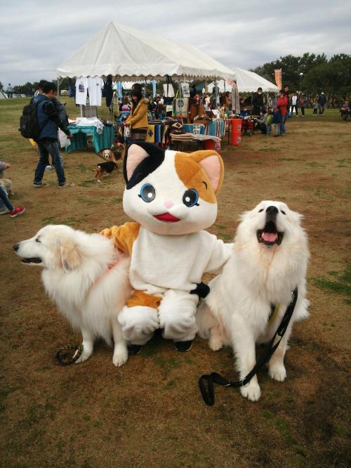 DSC_0915+三毛猫_convert_20160322203248