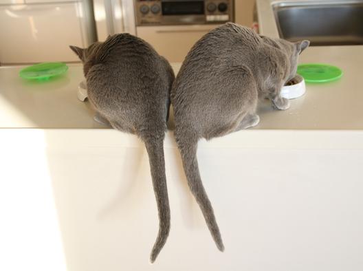 オチリ 尻尾長い