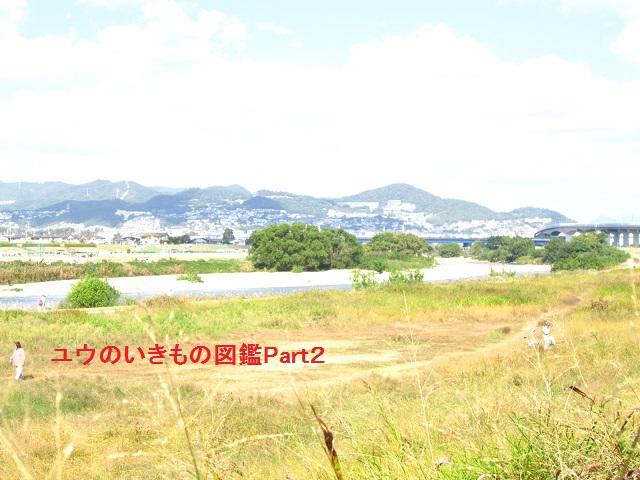 猪名川10