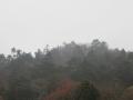 霧雨の樅林